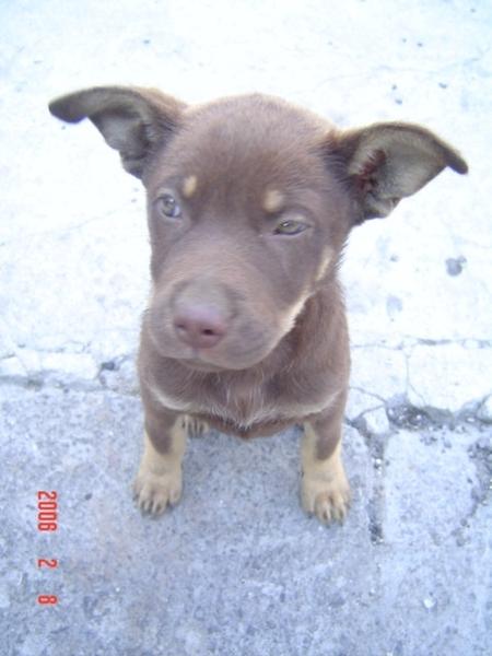 可愛的小狗狗