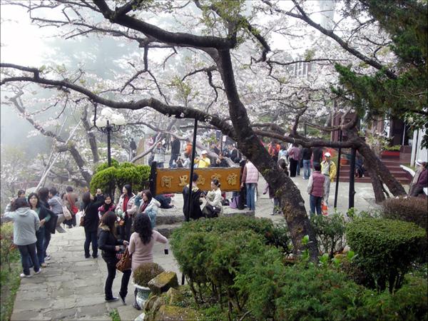 這是櫻花季...