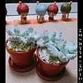 小盆栽-04.jpg