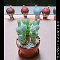 小盆栽-03.jpg