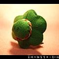旅蛙-03.jpg