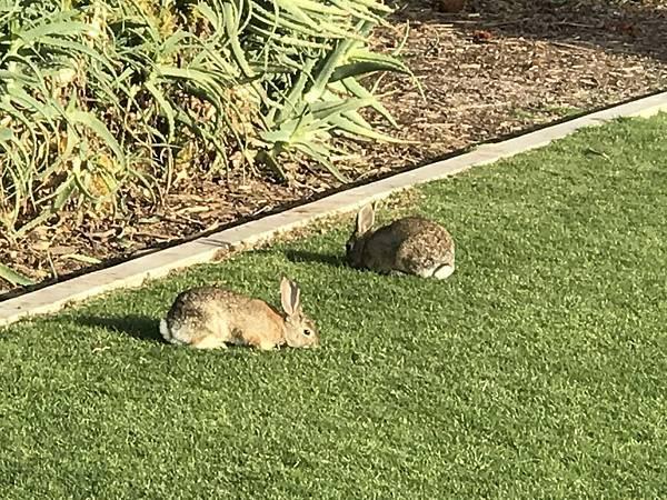 公園發現小兔子