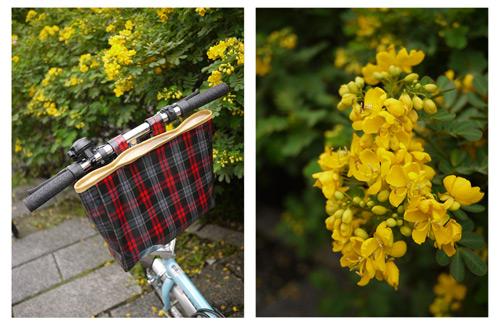 秋的單車遊。小折掛袋