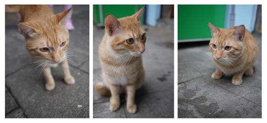 老街上的貓咪