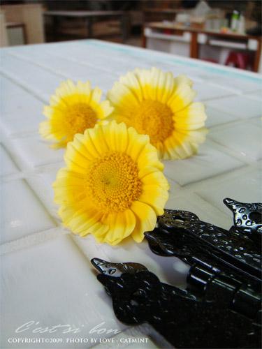 老師女兒送我的小花 ^^
