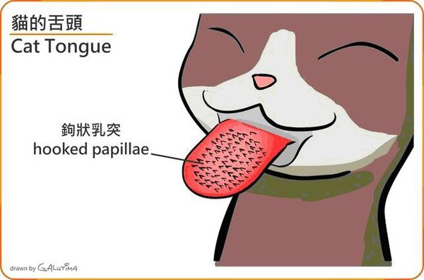 貓咪舌頭2.JPG