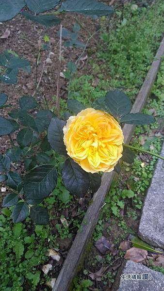 國道3號關西休息站-玫瑰園