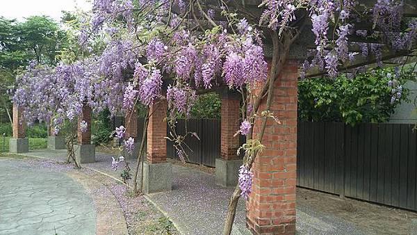 紫 藤 花 廊,杜 石 地 一 號 FB 粉 絲 團