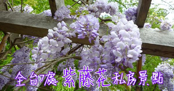 全台7處紫藤花私房景點
