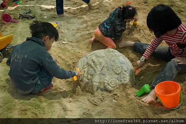 大佳河濱公園沙坑 發現化石