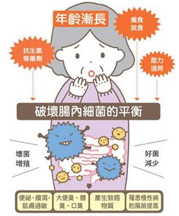 隨著年齡漸長,腸道內益生菌減少,壞菌增殖..