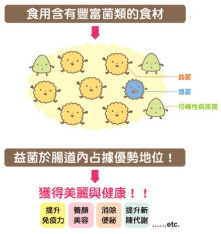 腸內細菌被分為益生菌、伺機性病原菌、壞菌等三種