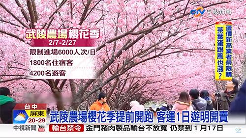 2019活動推薦:台中 ✪ 2019武陵農場櫻花季