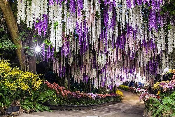 台南「大坑休閒農場」-2019紫藤花裝置藝術隧道