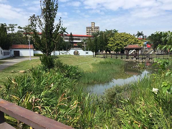 板橋溪北公園-公園內還有一條小河~綠油油的還開了水仙花!