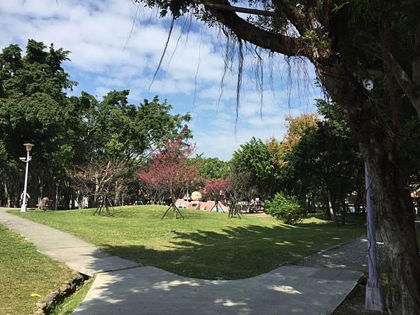 板橋溪北公園- 櫻花