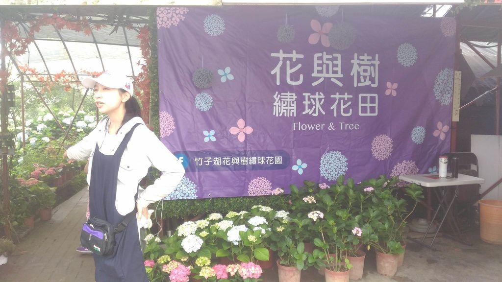 竹子湖 花與樹繡球花園