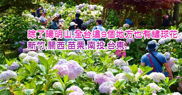 除了陽明山,全台這9個地方也有繡球花:新竹,關西,苗栗,南投,台東..