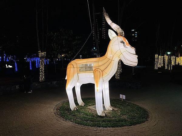 1-戽斗瞪羚-1.jpg