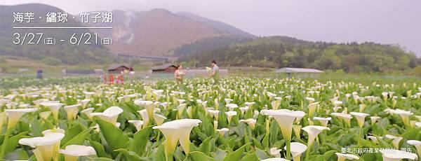 台北展覽活動2020推薦:陽明山竹子湖海芋季2020/繡球花季