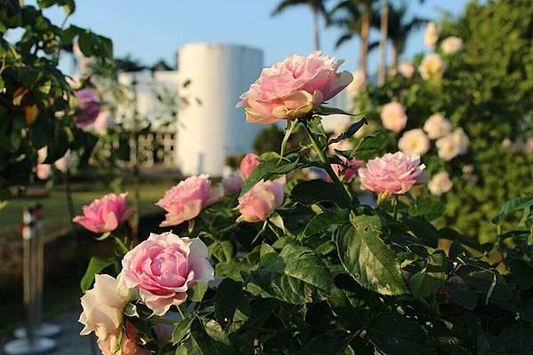 全台展覽活動2020推薦:臺北玫瑰展2020