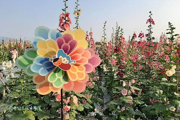 彰化展覽活動2020推薦 愛在員林蜀葵花季2020