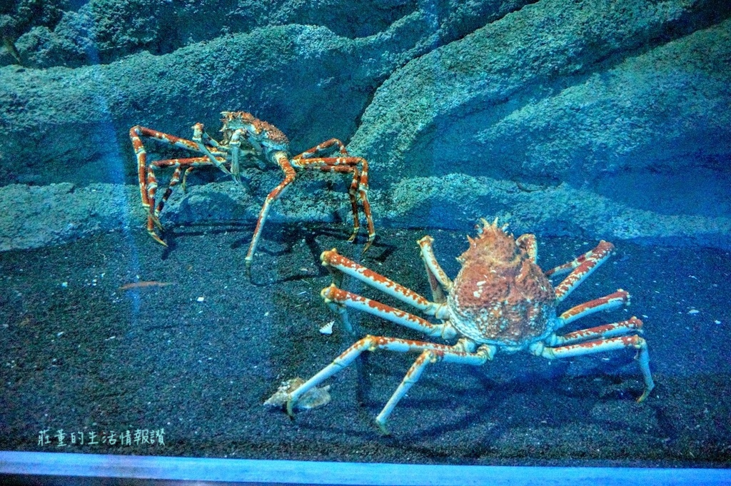 XPARK巨螯蟹