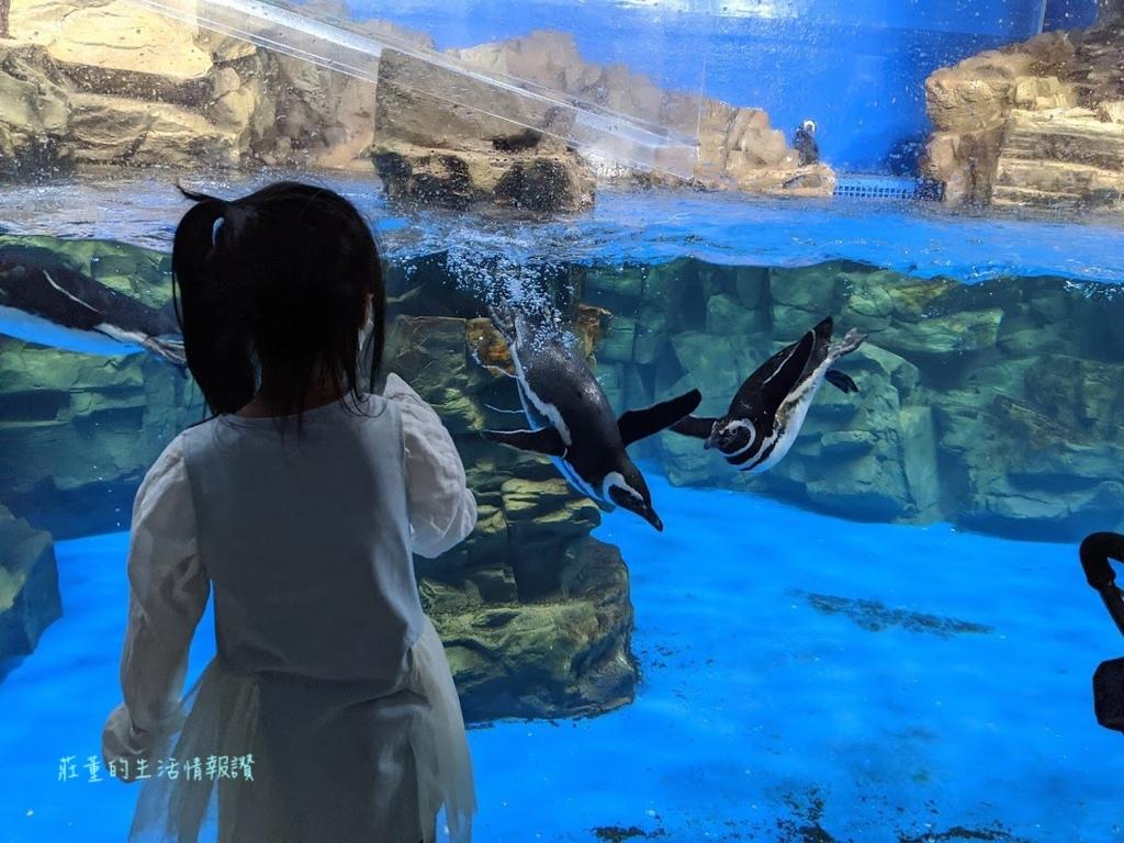 XPARK企鵝.jpg