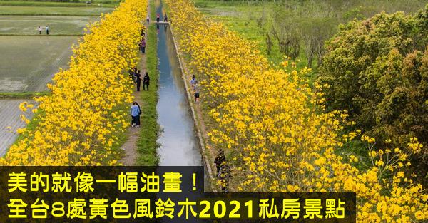 黃花風鈴木2021.jpg