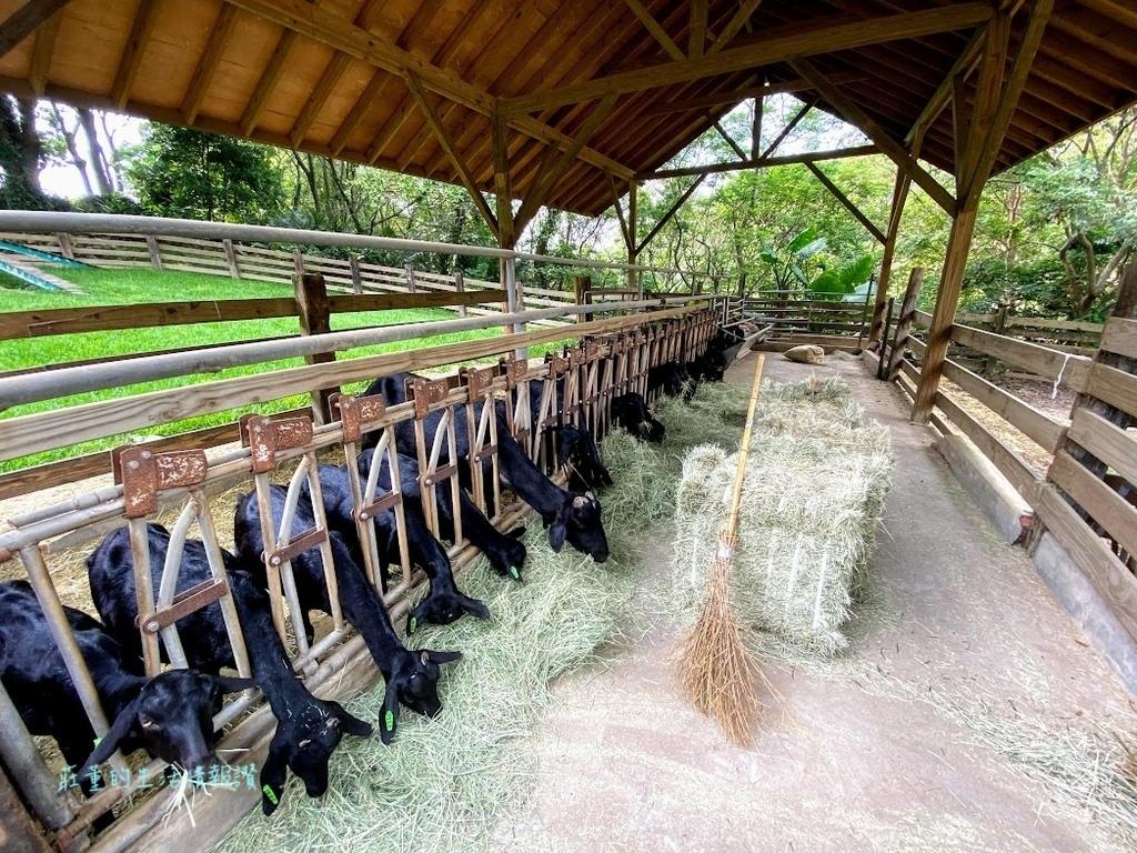 自然的飛牛牧場環境 (4).jpg