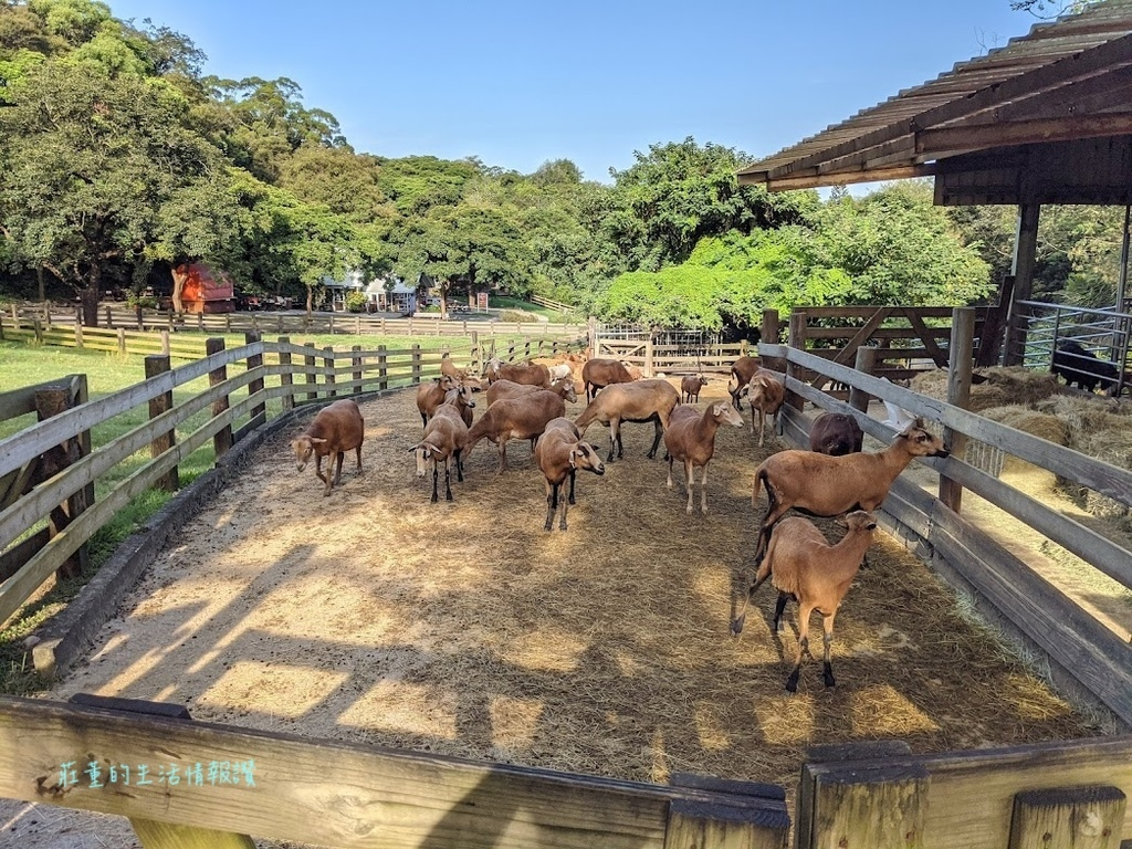 自然的飛牛牧場環境 (10).jpg