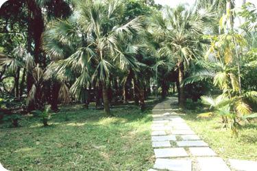 棕櫚油1.JPG