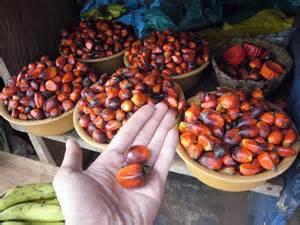 棕櫚油5.jpg