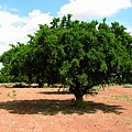 摩洛哥堅果油1.jpg