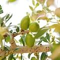 摩洛哥堅果油2.jpg