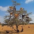 摩洛哥堅果油5.jpg