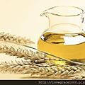 小麥胚芽油1.jpg