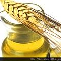 小麥胚芽油2.jpg