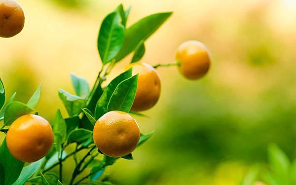 橘油8.jpg