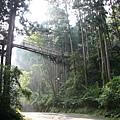 漫步林間7.jpg