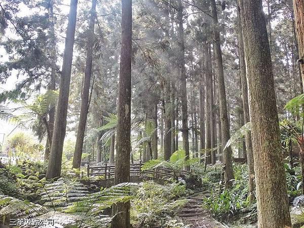 漫步林間8.jpg