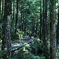 檜木2.jpg