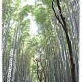 嵯峨嵐山竹林