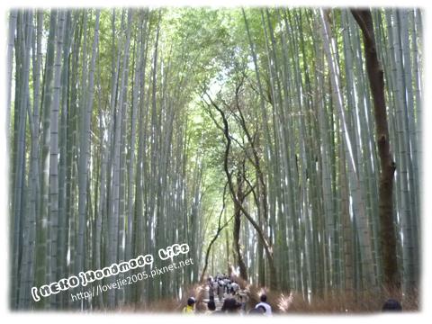 嵯峨嵐山竹林遊客很多