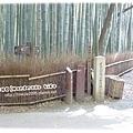 嵯峨嵐山竹林裡的路標