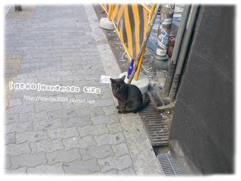 終於出現日本的貓了XD