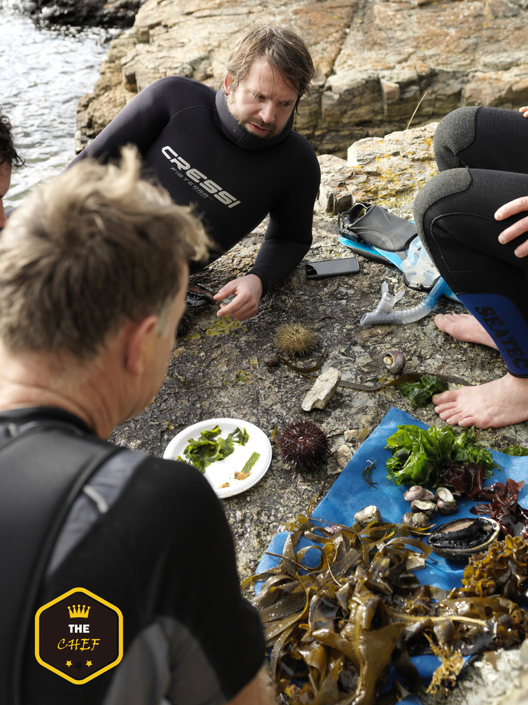 The Noma Australia team seaweed diving in Tasmania - Image by Jason Loucas.jpg
