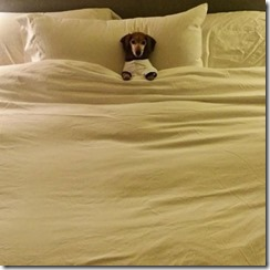dog-sleeping-bed-funny-2__605