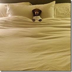 dog-sleeping-bed-funny-2__605