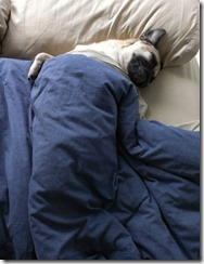 dog-sleeping-bed-funny-8__605